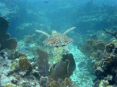 Diving Sombrero Reef, Marathon Key