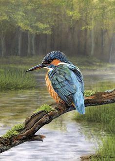 """Photo from album """"Nigel Artingstall, худ-к"""" on Yandex. Wildlife Paintings, Wildlife Art, Animal Paintings, Bird Drawings, Animal Drawings, Small Birds, Pet Birds, Beautiful Birds, Animals Beautiful"""