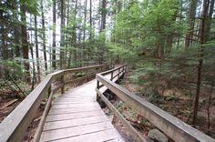 Boardwalk, Lynn Canyon Park, North Vancouver