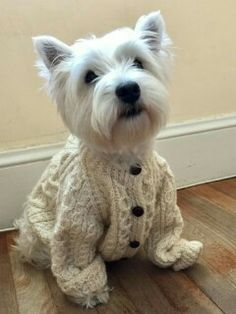 Do you like my cable knit sweater? It keeps me warm on cold winter days.