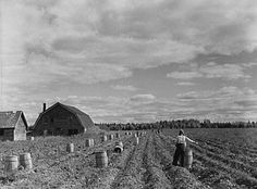Flashback Photos: The 1940 Maine Potato Harvest - New England ...