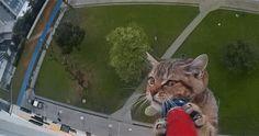 """""""O Grito do Bicho"""": Gato é resgatado após ficar preso em parapeito no ..."""