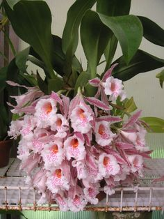 19 Exotic Types of Tropical Flowers for Home Decorations (Various Colors) Rare Flowers, Flowers Nature, Exotic Flowers, Tropical Flowers, Amazing Flowers, Pink Flowers, Beautiful Flowers, Orchids Garden, Orchid Plants