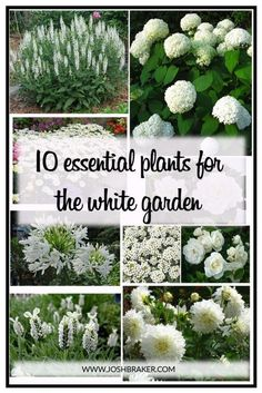 Top 10 Essential Plants For The White Garden. A great handy guide for selecting . Top 10 Essential Plants For The White Garden. A great handy guide for selecting the best white flowering plants for your garden Garden Shrubs, Shade Garden, Garden Paths, Garden Tips, Garden Planters, Plants For Garden, Perrinial Garden, Plants For Planters, Garden Border Plants