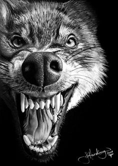 Wolf drawing by john harding on ARTwanted