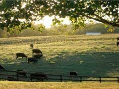 Sherwood Farms