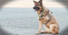 These six dogs have been deemed heroes. And when you see what they did for the humans they love you'll be moved. This is proof, dogs really are man's best friend!