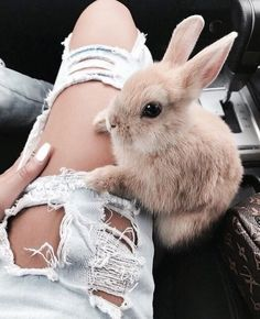 I need a rabbit for Easter # I need a .- Ich brauche einen Hasen zu Ostern Ich brauche einen Hasen zu Ostern … I need a rabbit for Easter # I need a rabbit for Easter – – - Photos Of Cute Babies, Cute Animal Photos, Animal Pictures, Cute Bunny Pictures, Cute Little Animals, Cute Funny Animals, Cute Dogs, Cute Animals Images, Funny Pets