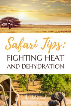 Read our guide to learn how to deal with the intense African heat and prevent heatstrokes by staying hydrated! Follow these tips to make the most out of your adventure! - Safari Guide - The Importance of Hydration - Safari Tips - Staying Out of The Heat - Safari Game Drives - Organising Your Safari Trips