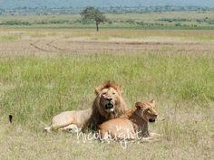 February Game Report, Masai Mara | Governors Camp | Nicola Light
