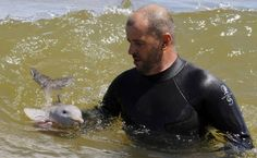 A Marine Mammal Vet teaches a Baby Dolphin to swim  ( baby dolphin! eep.)