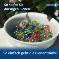 hydrangea garden care So einfach bastelt m -
