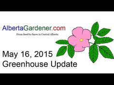 Greenhouse Update May 16 2015