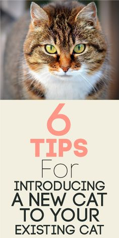 6 Tips For Introducing A New Cat To Your Existing Cat