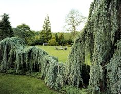 Magnificent weeping spruce, sweeping lawns, and evergreen garden space. Christopher Baker Photography.