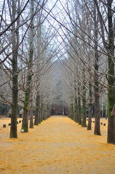 Lester's Chapters: Backpacking Korea Part 4: Nami Island & Namsan Seoul Tower