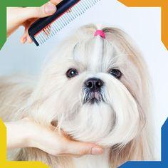 #PetsTip Recuerda que el cuidado adecuado para tu mascota incluye: ejercicio, entrenamiento, cuidados veterinarios, comida adecuada, peluquería y mucho amor.