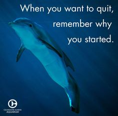 When the going gets tough, remember why you started! Dolphin Tale 2, Dolphin Quotes, Clearwater Marine Aquarium, Baby Dolphins, Ocean Life, Marine Life, Under The Sea, Inspiring Quotes, Awesome Quotes