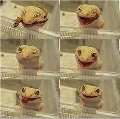 Cute gecko eating a little snack! Leopard Gecko Cute, Cute Gecko, Cute Reptiles, Reptiles And Amphibians, Cute Little Animals, Cute Funny Animals, Funny Cats, Cute Lizard, My Animal