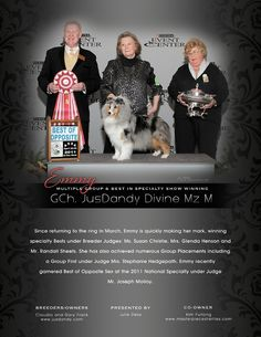 This is the perfect blue merle Sheltie. Blue Merle Sheltie, Animals Information, Dogs, Pet Dogs, Doggies
