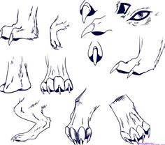 Drawing People Step by Step | How to draw a wolf step by step for beginners pictures 4