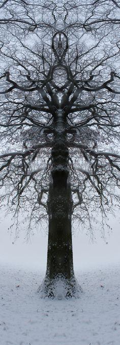 Totemtrees (janfufu 2013)