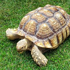 Slow and steady can win the online marketing race - some lessons from the ClickFrenzy meltdown