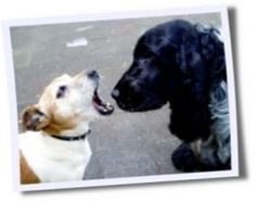 How to Stop a Dog From Biting - Stop Dog Aggression
