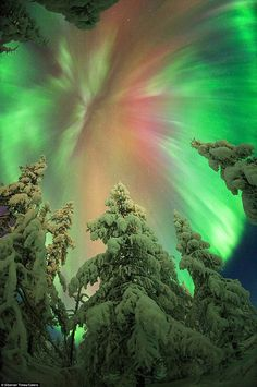 Photographer treks into Siberia for perfect shots of Northern Lights Braving temperatures as low as minus ~ as well as bears, wolves and frostbite – Ruslan waited for several nights to take the perfect Aurora Borealis picture Beautiful Sky, Beautiful Pictures, Ciel Nocturne, Northen Lights, Light Images, Natural Phenomena, Science And Nature, Amazing Nature, Belle Photo