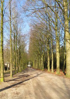 2015-03-08 De laan voor kasteel Eerde langs, begin van de rode wandelroute