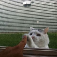 lol cat high five