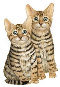 """Kittens"" - Illustration by Fiammetta Dogi"