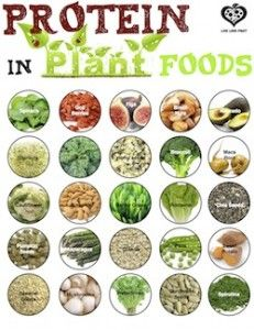A list of how much protein is in each plant. Genius!