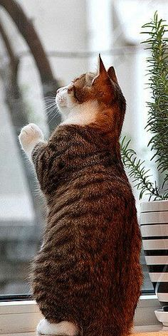 """""""Maybe 1 day I'll get out there! """""""