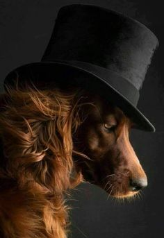 Find Out More On The Intelligent Golden Retriever Dogs Size Irish Setter, Animals And Pets, Funny Animals, Cute Animals, Dog Photos, Dog Pictures, Beautiful Dogs, Animals Beautiful, Beautiful Pictures