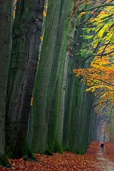Cycling, Sonian Forest, Brussels, Belgium
