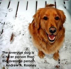The average dog is a nicer person than the average person - Andrew A. Rooney