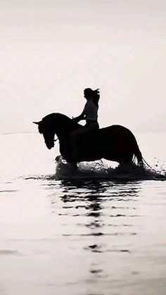 Tears Art, Majestic Horse, Cute Little Animals, Wild Horses, Horse Riding, Beautiful Images, Goal, Nature, People