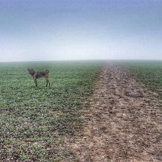 Not a never ending field. Just misty.