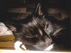 Vsco, My Photos, Cats, Animals, Gatos, Animales, Animaux, Animal, Cat