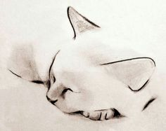 Minimalist ink and charcoal drawings of cats, dogs, birds, deer and other animals by artist Kellas Campbell. Watercolor Cat, Watercolor Artwork, Watercolor Animals, Tattoo Watercolor, Cat Drawing, Painting & Drawing, Gato Angel, Animal Drawings, Pencil Drawings