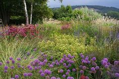 A Piet Oudolf Garden Creation in Bonn, Germany in High Summer Prairie Garden, Meadow Garden, Love Garden, Plant Design, Garden Design, Dutch Gardens, Planting Plan, Garden Images, Garden Borders