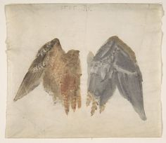 Bittern's Wings: study showing both sides
