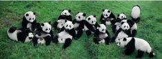 パンダだらけ。