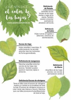 El color de las hojas Garden Bugs, Garden Pests, Green Garden, Edible Garden, Vegetable Garden Planner, Small Vegetable Gardens, Organic Gardening, Gardening Tips, Hydroponic Strawberries