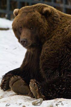 ** Bear