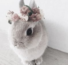 A beautiful flower wreath for a beautiful bunny - Süße tiere - Adorable Animals Cute Creatures, Beautiful Creatures, Animals Beautiful, Beautiful Images, Majestic Animals, Animals And Pets, Funny Animals, Cute Baby Bunnies, Baby Bunny Ears