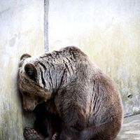 Come On ... this is AWFUL! You can spare 30 seconds to add your name to a petition to this poor bear out of this shameful situation.  To Gov. Bill Haslam: CLOSE DOWN BEAR PIT IN PIGEON FORGE, TENNESSEE ... Please sign and share widely. No animal should live like this. This bear has the same feelings as your beloved dog or cat!