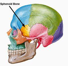 Sphenoid Sinusitis