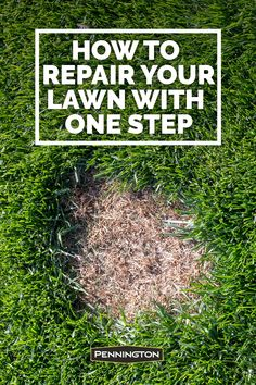 When bare spots or minor lawn damage pop up, you need a quick, effective remedy that puts your carpet of green back on track. Container Herb Garden, Container Gardening Vegetables, Vegetable Garden, Easy Garden, Lawn And Garden, Garden Ideas, Outdoor Plants, Outdoor Gardens, Lawn Repair